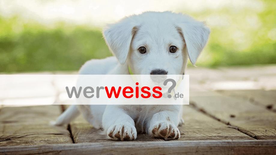 Was Hilft Gegen Hundeurin Im Teppich Werweiss De