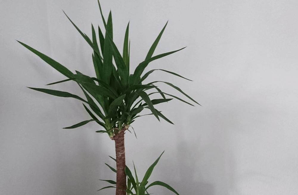 Was bedeutet Halbschatten bei Pflanzen?